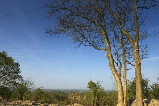 Crowhurst Park: View