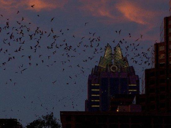 Congress Avenue Bridge / Austin Bats: Bats in the distance