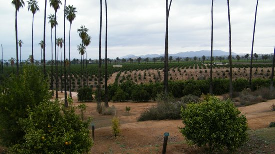 California Citrus State Historic Park: groves