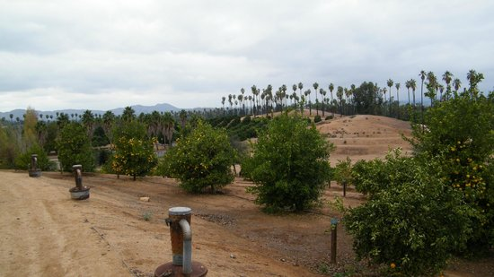 California Citrus State Historic Park: groves...from park walk