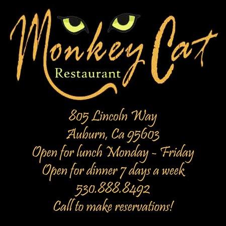 Monkey Cat info