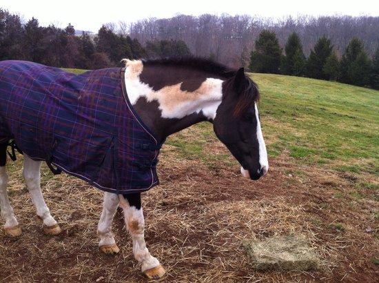 بلاك هورس إن: Enjoying some hay 