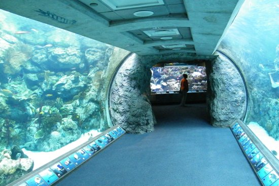 Aquarium of the Pacific: tunnel through the aquarium