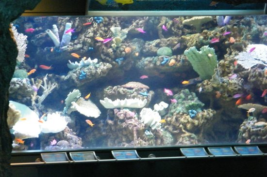 Aquarium of the Pacific: aquarium