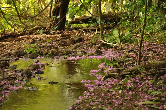 Corcovado National Park: flower river