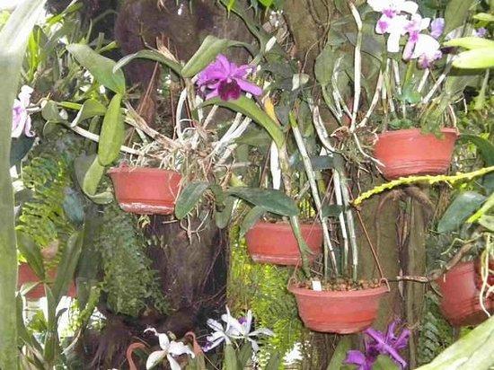 Palmenhaus Schoenbrunn: Orchidées
