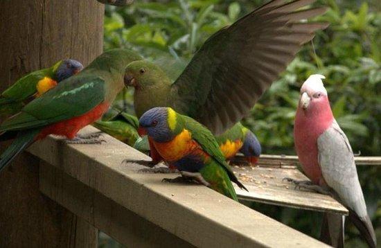 Seas The Day B&B: Friendly parrots