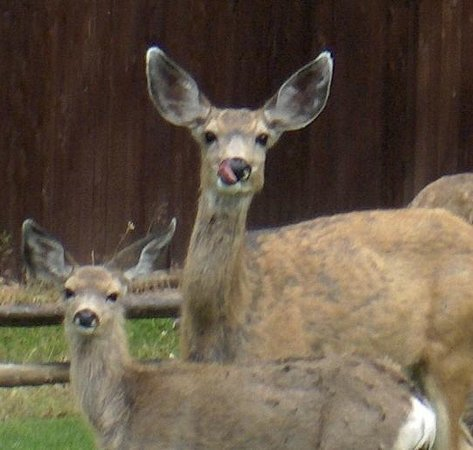 Blue Spruce Bed and Breakfast: Frequent visitors