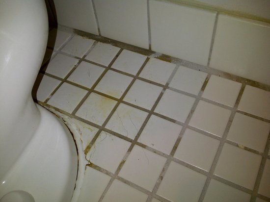 La Quinta Inn & Suites Melbourne Viera: Puddle of what appears to be urine with body hairs in it