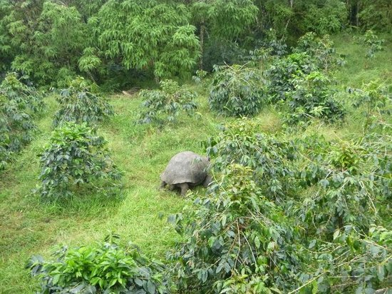 Semilla Verde Boutique Hotel: Tortoise + coffee plants view from the top room