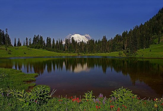 Tipsoo Lake Loop : Mount Rainier and Tipsoo Lake and some wild flowers
