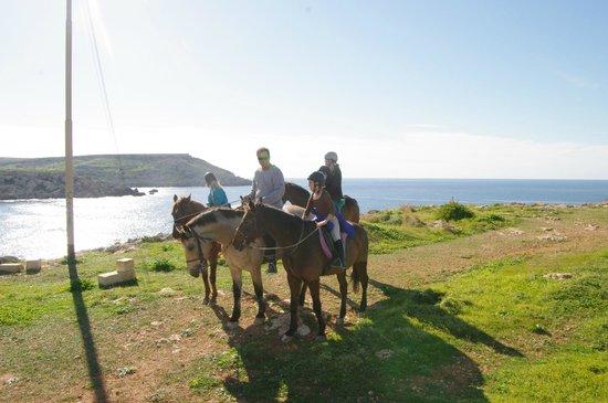 Golden Bay Horse The family enjoying th...