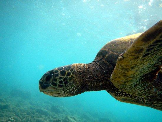 Malama Ke Kai - Reef Guides Hawaii: *