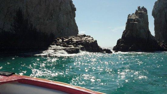 Villa del Palmar Beach Resort & Spa Los Cabos: Sea Lions