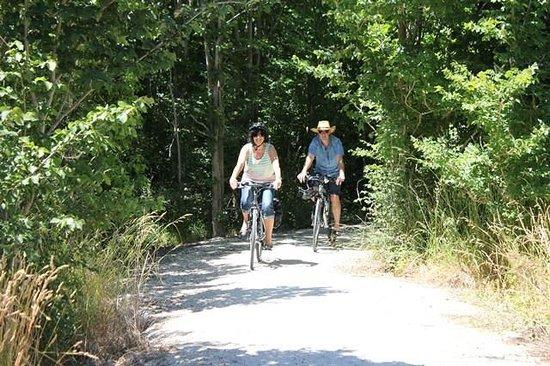 Takaro Trails Cycle Tours - Day Tours: Riding the limestone trail