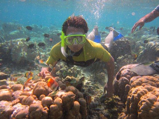 Bunaken National Marine Park: di dalam laut bunaken