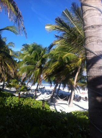 Hotel Cabanas Tulum: the view