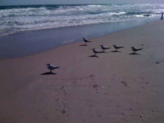 John D. MacArthur Beach State Park: the beach