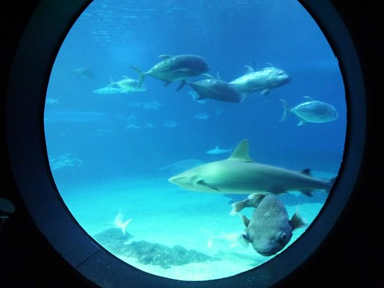 Maui Ocean Center: portal window into the shark tank