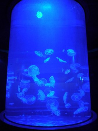 Maui Ocean Center: Jellyfish tank