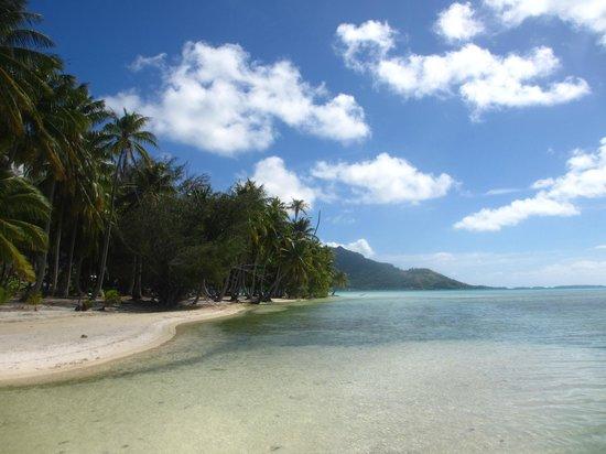 Bora Bora Lagoonarium : The island of the Lagoonarium