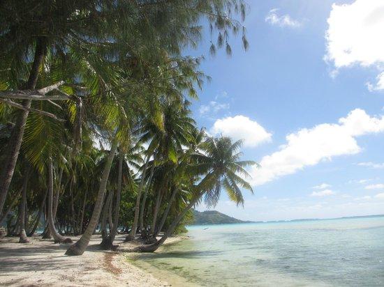 Bora Bora Lagoonarium : The island