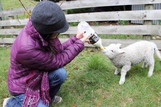 The Croft: I LOVED feeding Percy!!