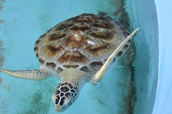 Bentota, Sri Lanka: Having a swim