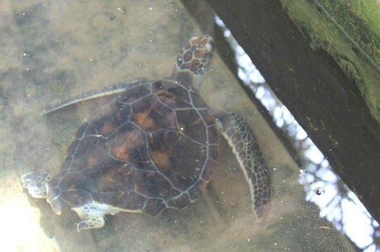 Bentota, Sri Lanka: Missing foot