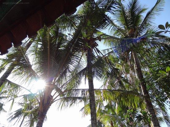 Lodtunduh Sari: Trees n' stuff