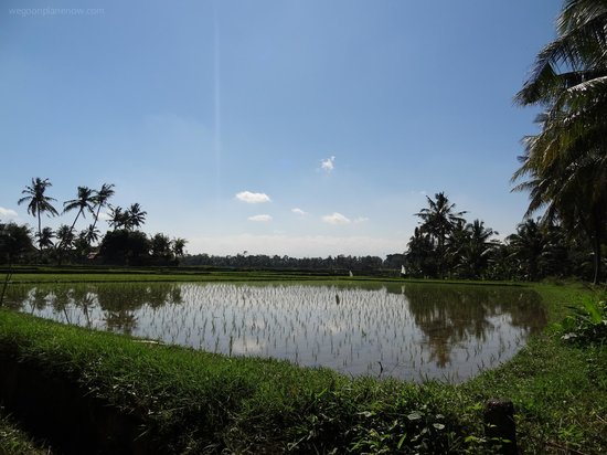 Lodtunduh Sari: Nearby rice paddies