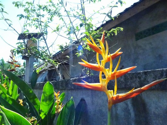 Lodtunduh Sari: Plants