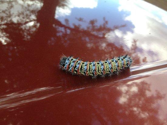 Nkwazi Lake Lodge: Caterpillar
