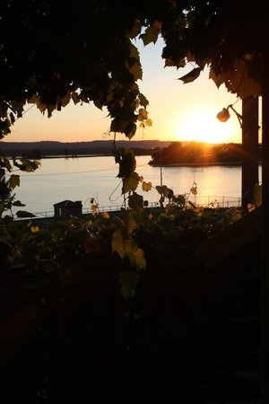 Felice Patra Inn: View from the deck doors through the vines of the river.