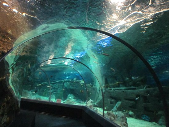 Kurortny Gorodok, รัสเซีย: Тоннель-аквариум