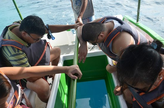 Dumaluan Beach Resort 2: Glass-bottom boat ride, PhP150/pax minimum of 5