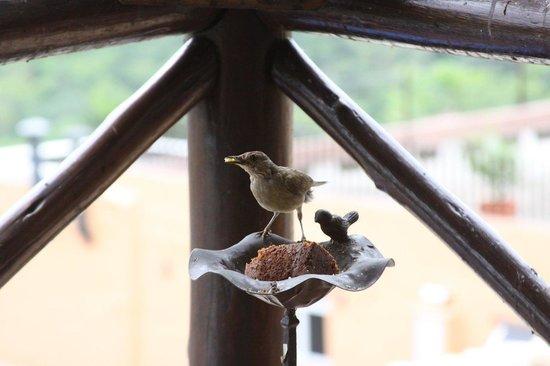 Pousada Terraco Penedo: Pássaro fazendo companhia no café da manhã.