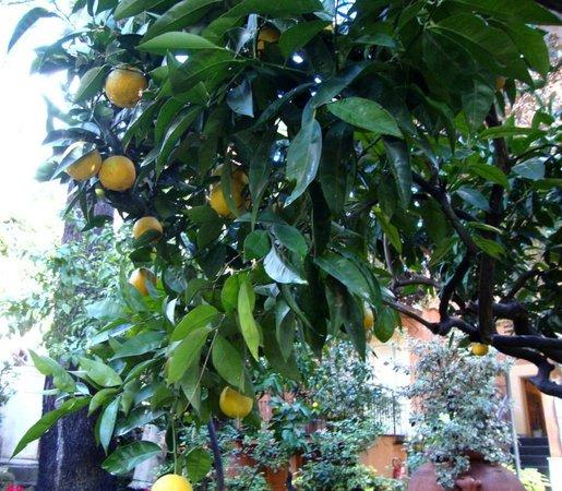 Hotel Villa San Pio: Mandarin Oranges