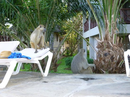 ‪‪Baobab Beach Resort & Spa‬: baboons‬