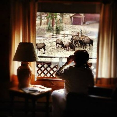 Valhalla Resort : Elk viewing from the Cabin