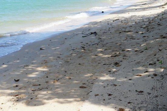 Health Oasis Resort: The beautiful beach...