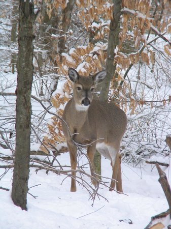The Wilderness Center: Deer at Feeder Station