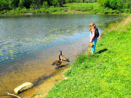 The Wilderness Center: Kids exploring pond