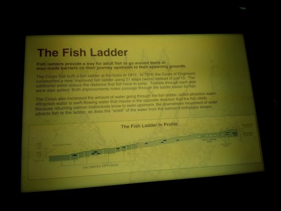 Hiram M. Chittenden Locks: a board about the fish ladder