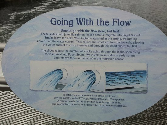 Hiram M. Chittenden Locks: going with the flow