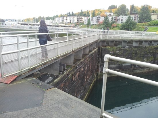 Hiram M. Chittenden Locks: the difference in water levels