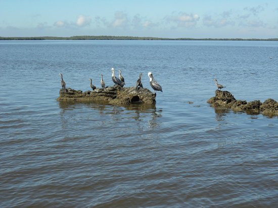 Gulf Coast Visitor Center : Lots of pelicans