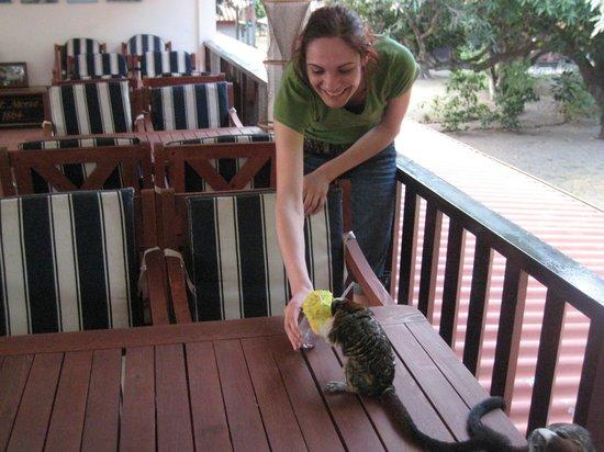Taborcillo Island Resort: feeding monkey