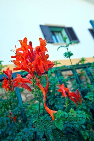Casale la Zagara: La flora