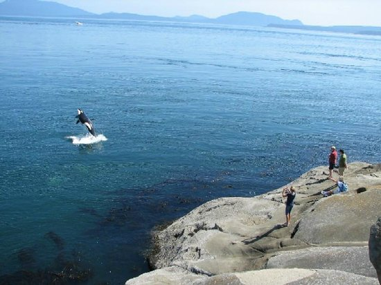 Gulf Islands National Park Reserve of Canada: Whale watching at East Point, Saturna Island